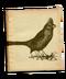 C139 Beautiful birds i03 Northern Cardinal