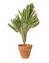 C484 Steffan's dwelling i05 Aglaonema plant