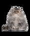C172 Purebred cats i01 Persian cat