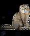 C172 Purebred cats i03 Scottish fold cat