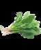 C295 Nutritious salad i01 Spinach