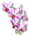 C205 Beautiful Flowers i01 Orchid