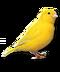 C019 Birds Paradise i03 Canary