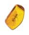 C089 Insects in amber i03 Ancient ant