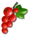 C024 Grandmothers Jam i03 Redcurrant berries