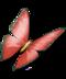 Treasure Island Update Butterfly red
