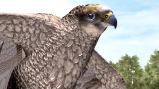 File:Falcon.png