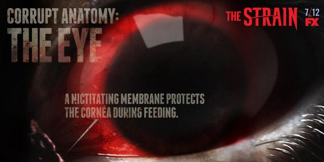 File:Corrupt-Anatomy-The-Eye-the-strain-fx-38643281-1024-512.jpg