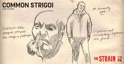 Common-Strigoi-Sketch-the-strain-fx-38643294-1024-535