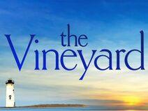 The vineyard 3