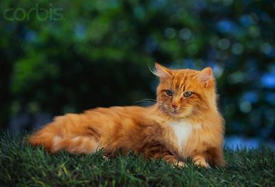 File:Orange-cat.jpg