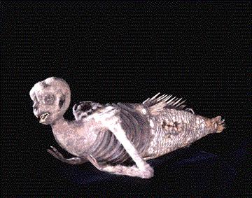 File:Mermaid1.jpg
