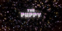 The Puppy
