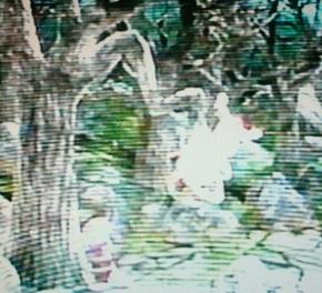 File:Tree-grab.jpg