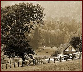 Ash Lawn - Highland (Sepia)