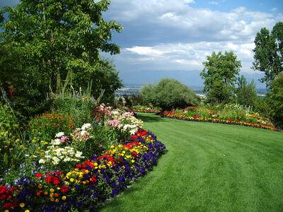 Summer 07 lawn garden