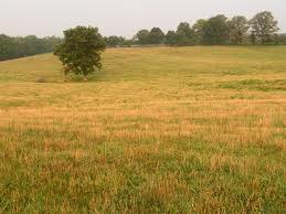 File:Field.png