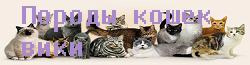 Породы кошек вики