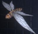 Blood Moth