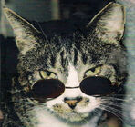 Charlie the Cat (Musician)