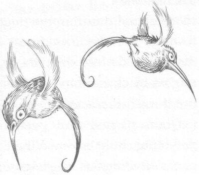 Emeraldmossbirds
