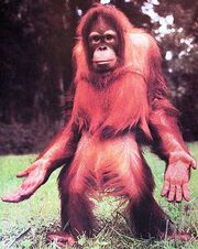 Orangutan-open-hands