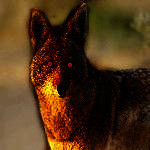File:Wolf mutt 副本.jpg