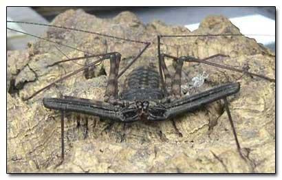 File:Creepiest spider ever.jpg