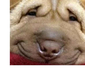 File:Fat Dog.png