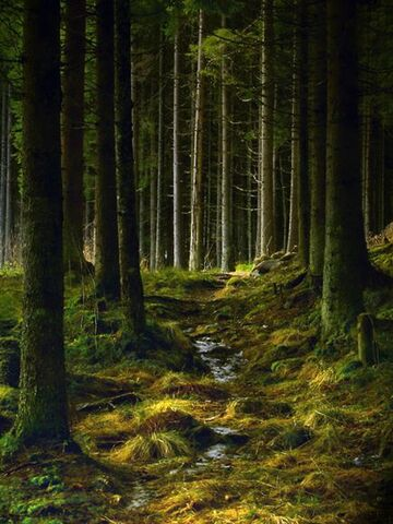 File:Kongsvinger-norway-trees 11912 600x450.jpg