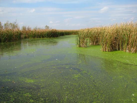 File:Marsh-marsh.jpg