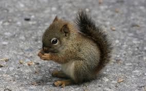 File:Cute Squirrel.jpg