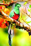 Quetzal Mutt