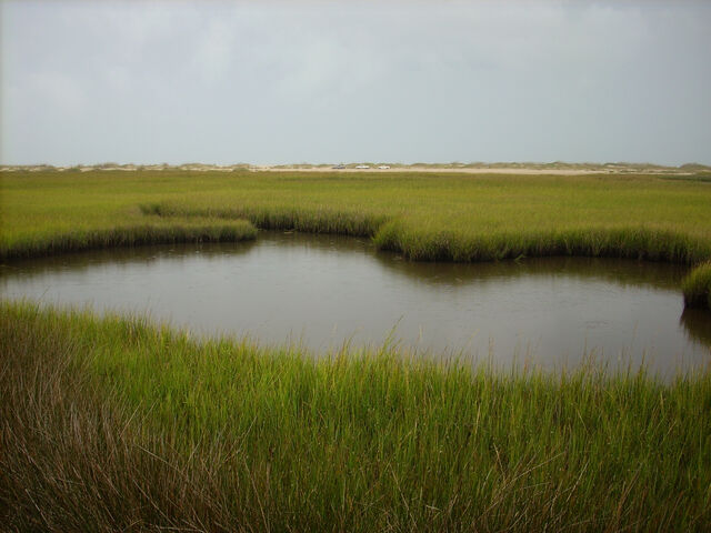 File:Fort Fisher State Recreation Area Salt Marsh.JPG