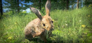 Eu rabbit screenshot 01