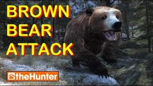 TheHunter Brown Bear Attack and New Hurt Screen