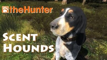 Scent Hounds - theHunter 2016