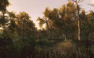 Swamp reserve 05