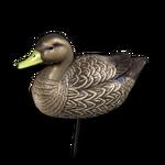 Decoy american black duck female