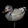 Decoy gadwall male