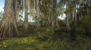Swamp reserve 02