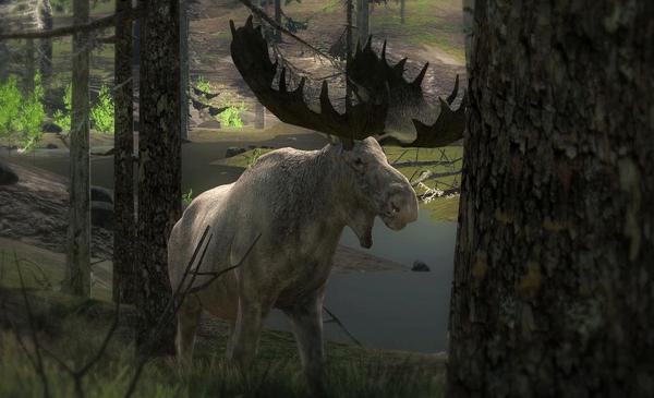 Repsnake 215 Albino Moose