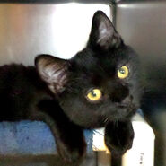 Leon- for adoption