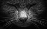 227805-stock-photo-white-beautiful-joy-calm-black-animal