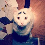 Insagram cat 5