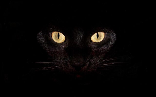 File:Black-cat-desktop-backgrounds-Wallpaper.jpg