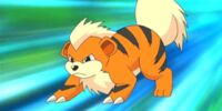 Jace's Growlithe