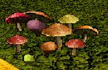 File:Rainbow Mushrooms.png