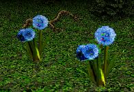 File:Wind Flower.png