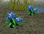 File:Ladys Slipper Flower.png